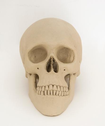 crani frontal